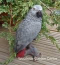 Woodside Garden Centre Essex Pots To Inspire Garden