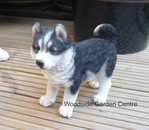 Resin Husky Puppy Standing Vivid Arts Garden Ornament