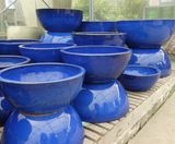 Large Fully Blue Glazed Lotus Low Bowl Garden Pot